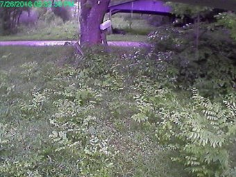 Webcam Reedy, West Virginia
