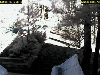 Webcam Munds Park, Arizona