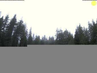 Webcam Humptulips, Washington