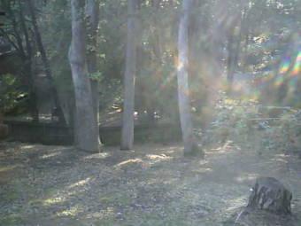 Webcam Twain Harte, California