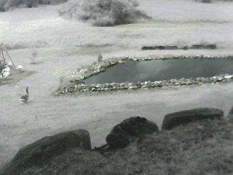 Webcam Byron, Michigan