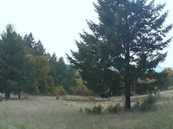 Webcam Yamhill, Oregon