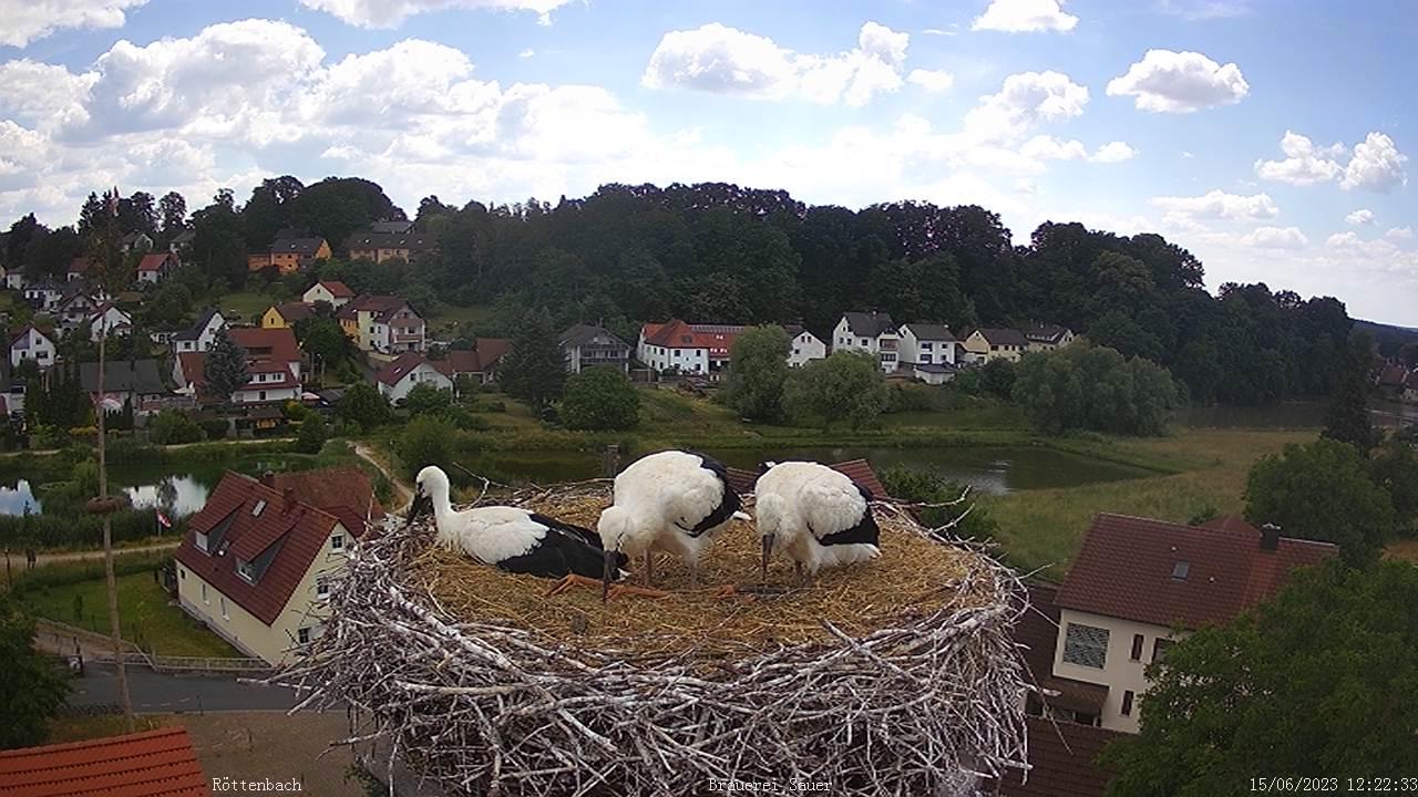 Röttenbach Storchencam