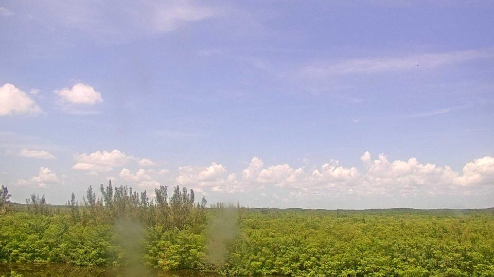 Saint Petersburg, Florida Fr. 14:09