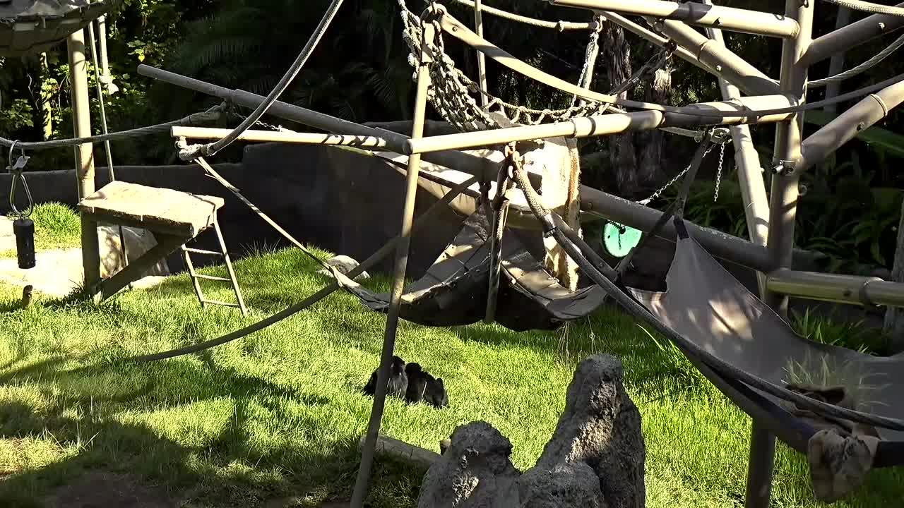 San Diego, California - Webcam Galore