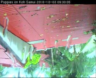 Webcam Koh Samui