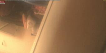 Webcam Piraeus