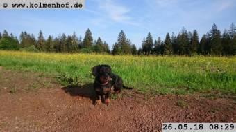 Webcam Furtwangen im Schwarzwald