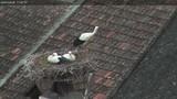 Webcam Rust (Burgenland)