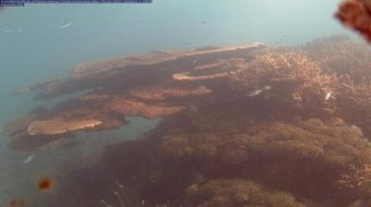 Webcam Great Barrier Reef - Davies Reef