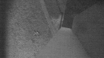 Webcam Buchanan, Virginia