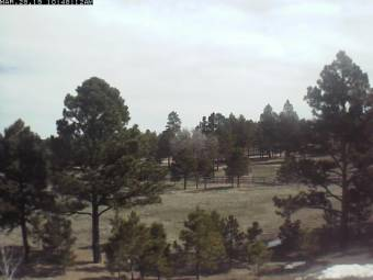 Webcam Black Forest, Colorado