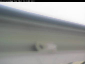 Webcam Rocquaine Bay