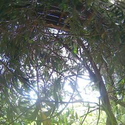 Webcam Onetangi (Waiheke Island)