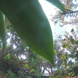 Webcam Kingsville