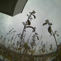 Webcam Taufkirchen