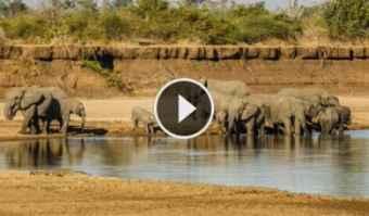 Webcam South Luangwa National Park